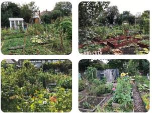 community garden hd